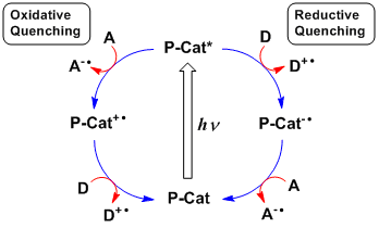 Photoredox catalysis by oxidative and reductive pathways