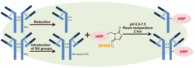 HRP-labelling of an antibody with H1621