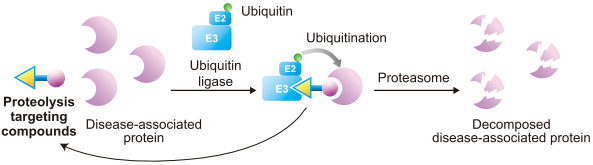 Mechanism of proteolysis of disease-associated proteins
