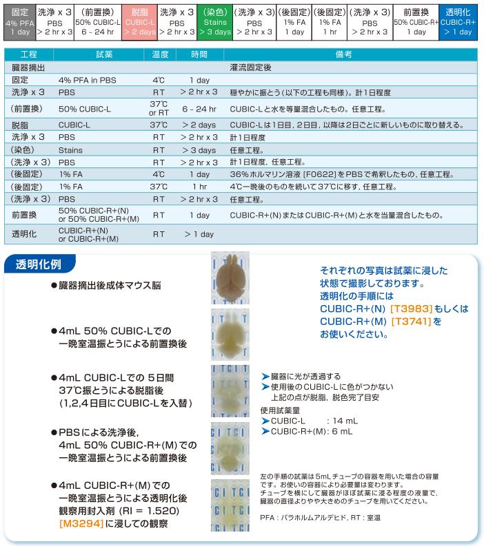 マウス臓器透明化手順