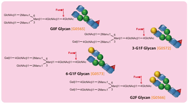 Core-fucosylated N-Glycan