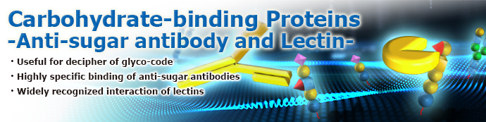 Carbohydrate-binding Proteins ―Anti-sugar antibody and Lectin―