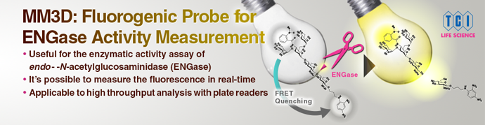 MM3D: Fluorogenic Probe for Real-Time Measurement of ENGase Activity