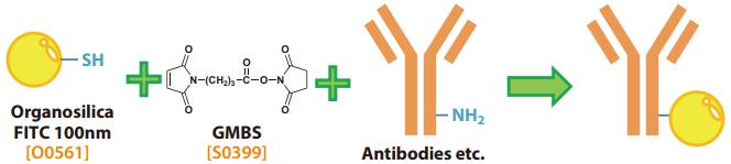 Antibody-Labeling using Fluorescent Organosilica Particle