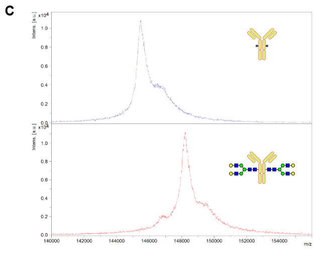 MALDI TOF/MS analysis (Intact)