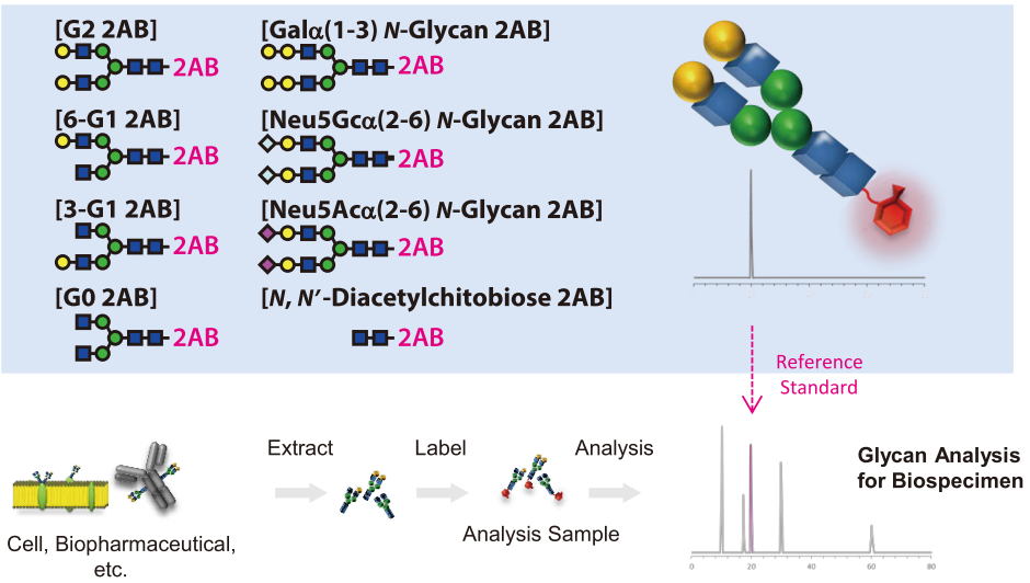 Labeled N-Glycan