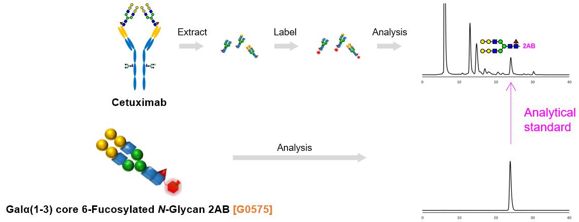Analysis Example of Non-human Type Glyco-epitopes