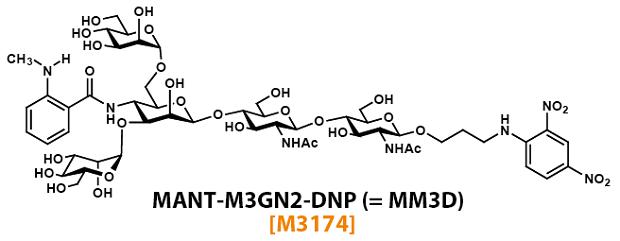 糖加水分解酵素ENGase活性をリアルタイムで検出できる蛍光性基質 MM3D ...